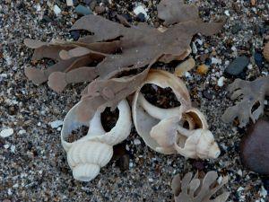 Two Shells Image