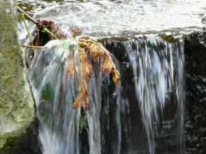 Autumn Leaf in Waterfall Image