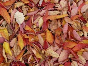 Autumn Leaf Litter Image