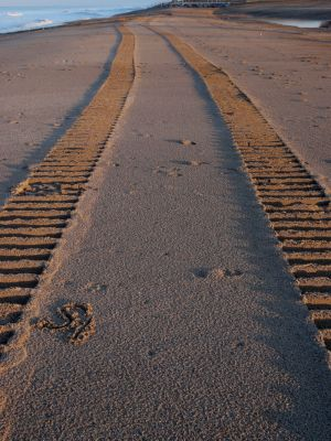 Beach Tracks Image