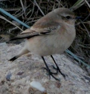 Mystery Bird on Rock Photography
