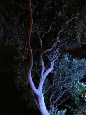 Picture: Blue Illuminated Tree