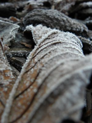 Frost on Leaf - Close Up Picture