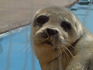 Cute Seal Picture