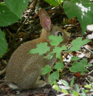 Cute Hiding Rabbit Picture