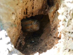 Hide Away Snail Photography