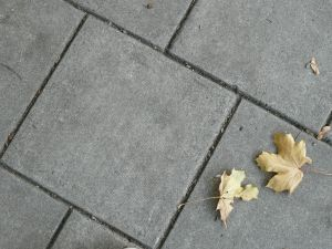 Leaves on Path Image