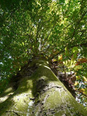 Moss on Tall Tree Trunk Photograph