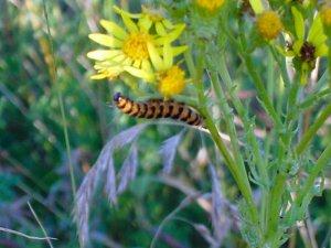 Orange Striped Caterpillar Photograph