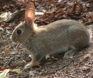 Young Rabbit Photo