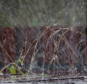 Rain Splashing And Grass Picture
