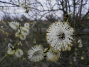 Spring Flowering Tree Image