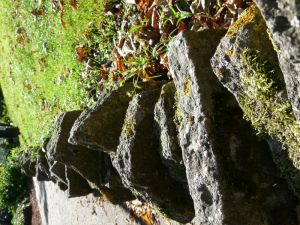 Stone Wall Photography Picture