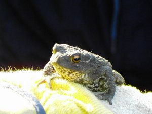 Toad in the Garden Photograph