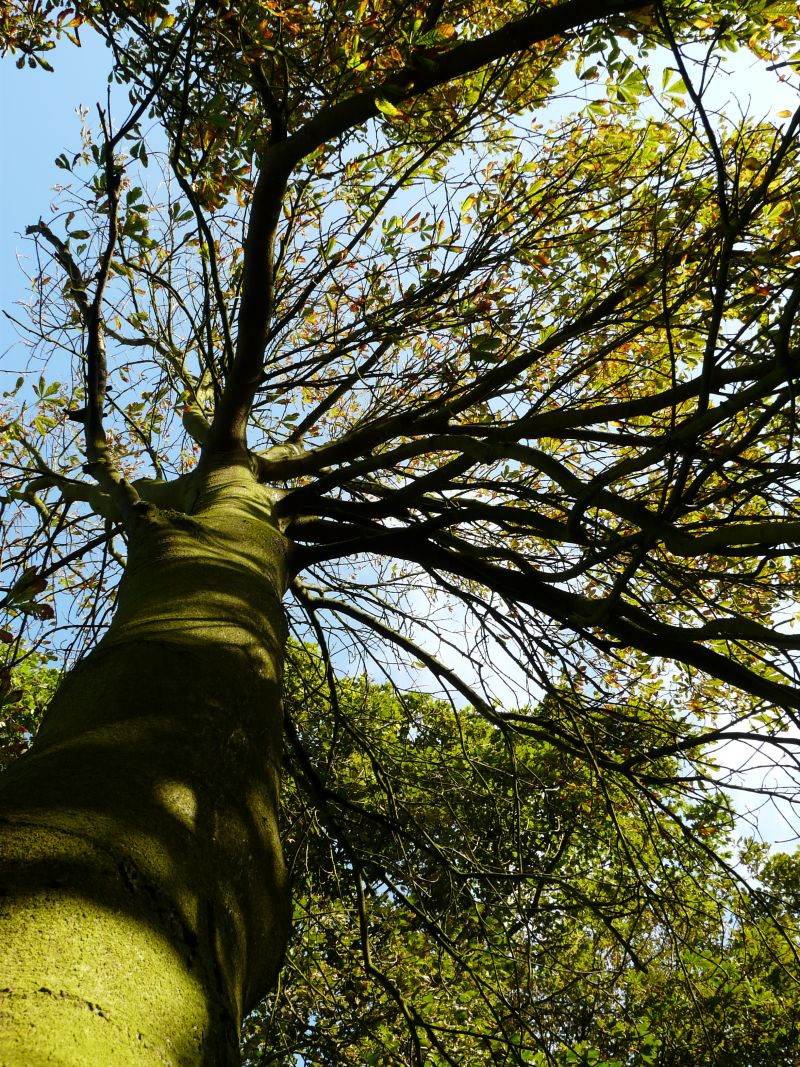 Tree canopy | Learn everything there is to know about Tree canopy