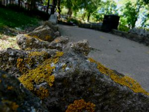 Yellow Moss On Wall Image