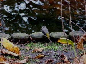 Yellow Tipped Bird Photograph
